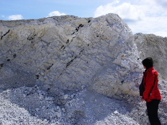 Durch pleistozäne Beanspruchung steil gestellte Kreidekalkablagerungen mit Feuersteinbändern im Tagebau Promoisel des Kreidewerks Rügen GmbH (Foto: K. Kleeberg)